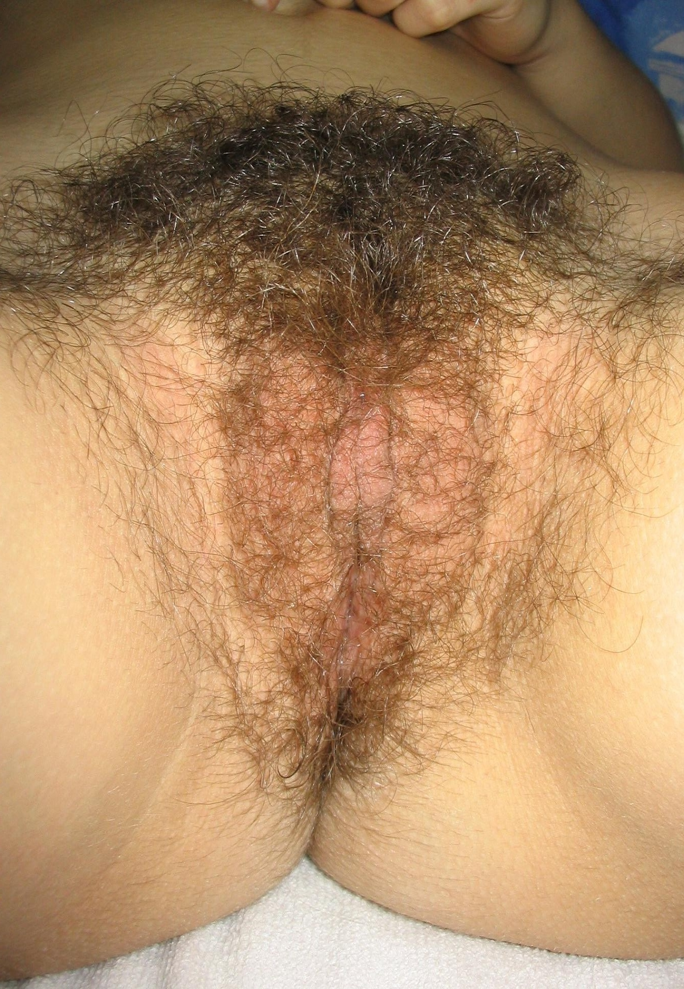 file:pubic hair - vulva unshaved - wikimedia commons