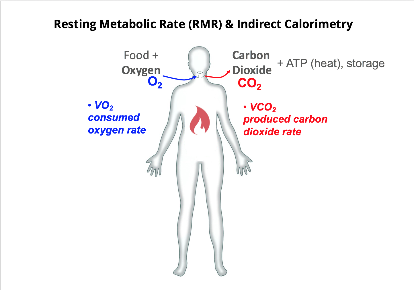 RMR: What Is Resting Metabolic Rate