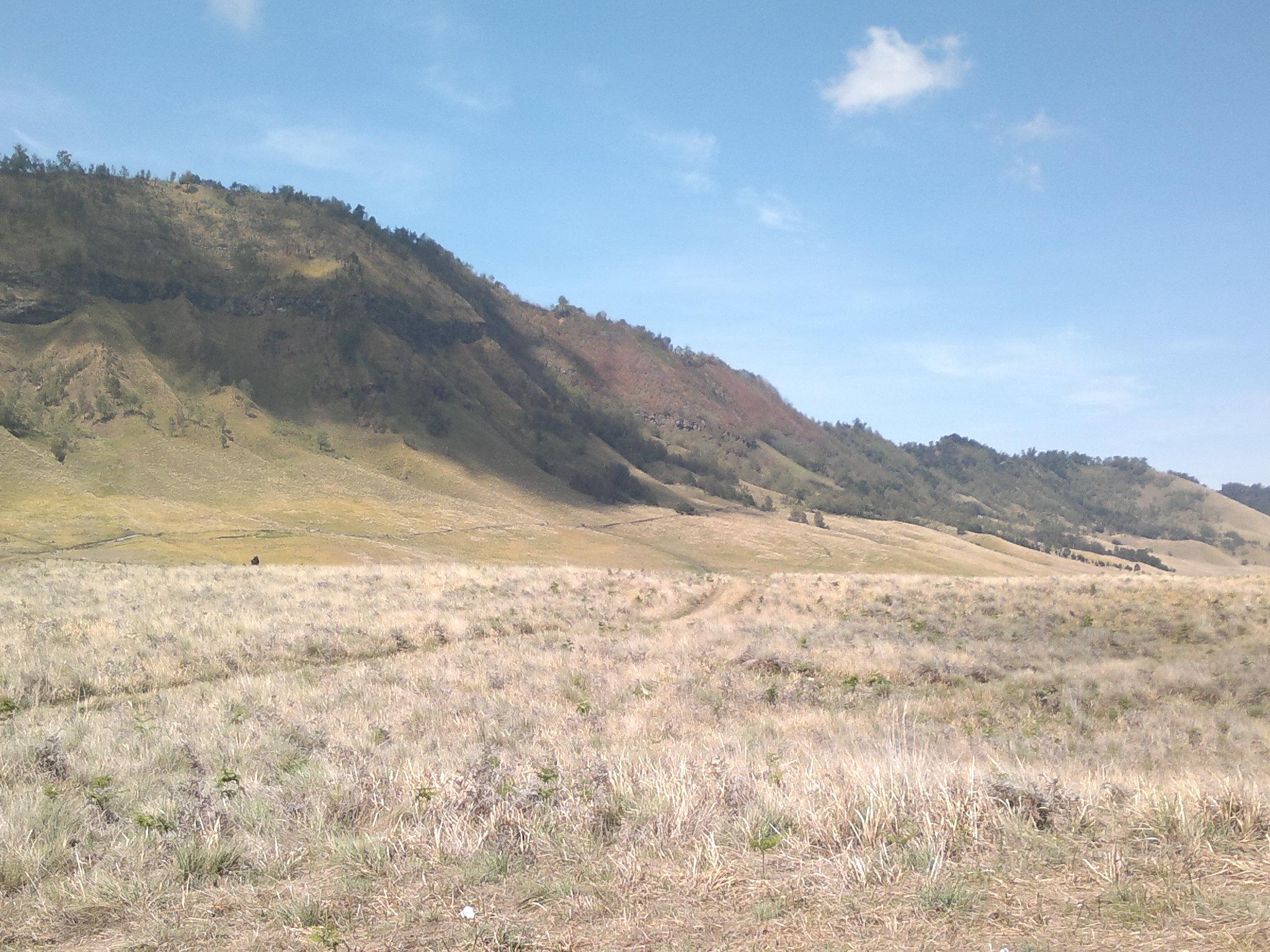 File:Savanna Di Balik Gng Bromo - panoramio.jpg