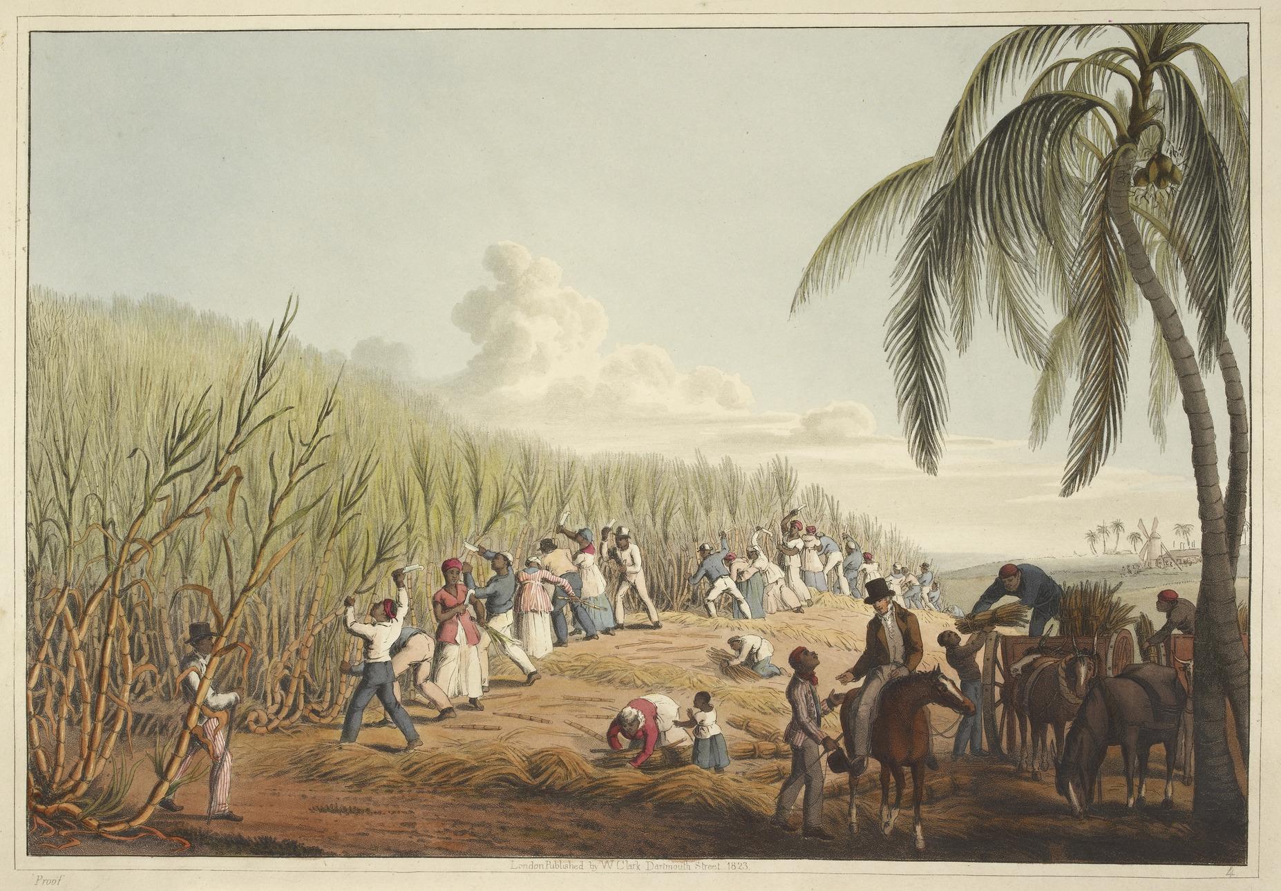 Image result for slaves sugar plantation