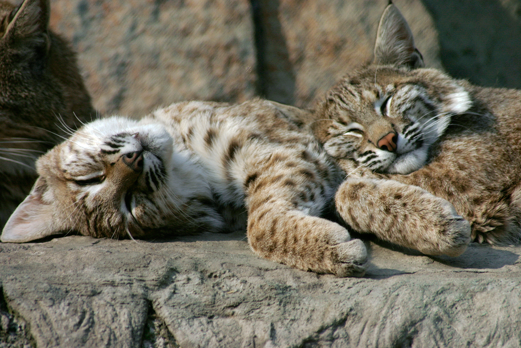 Image Result For Can Kittens Eat