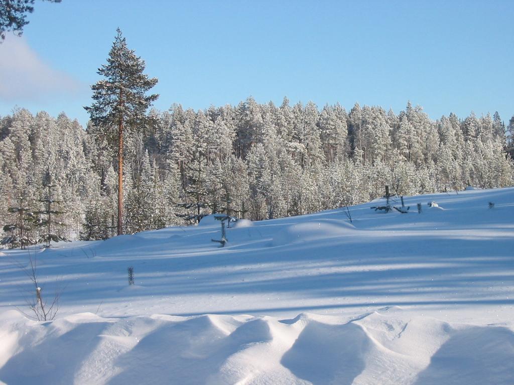 File:Tolja forest in winter.jpg - Wikimedia Commons