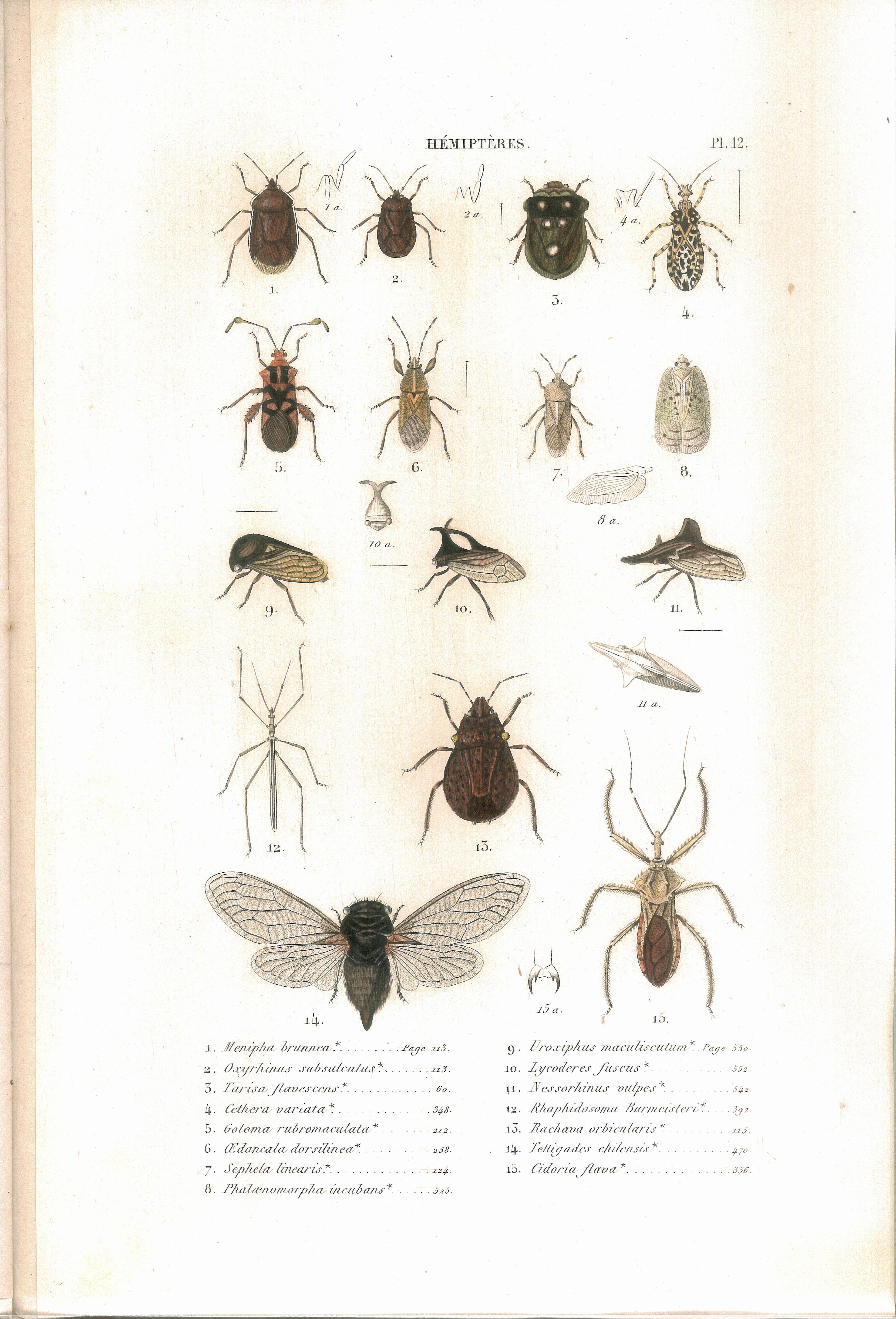 file amyot c j histoire naturelle des insectes hemipteres planche wikimedia. Black Bedroom Furniture Sets. Home Design Ideas