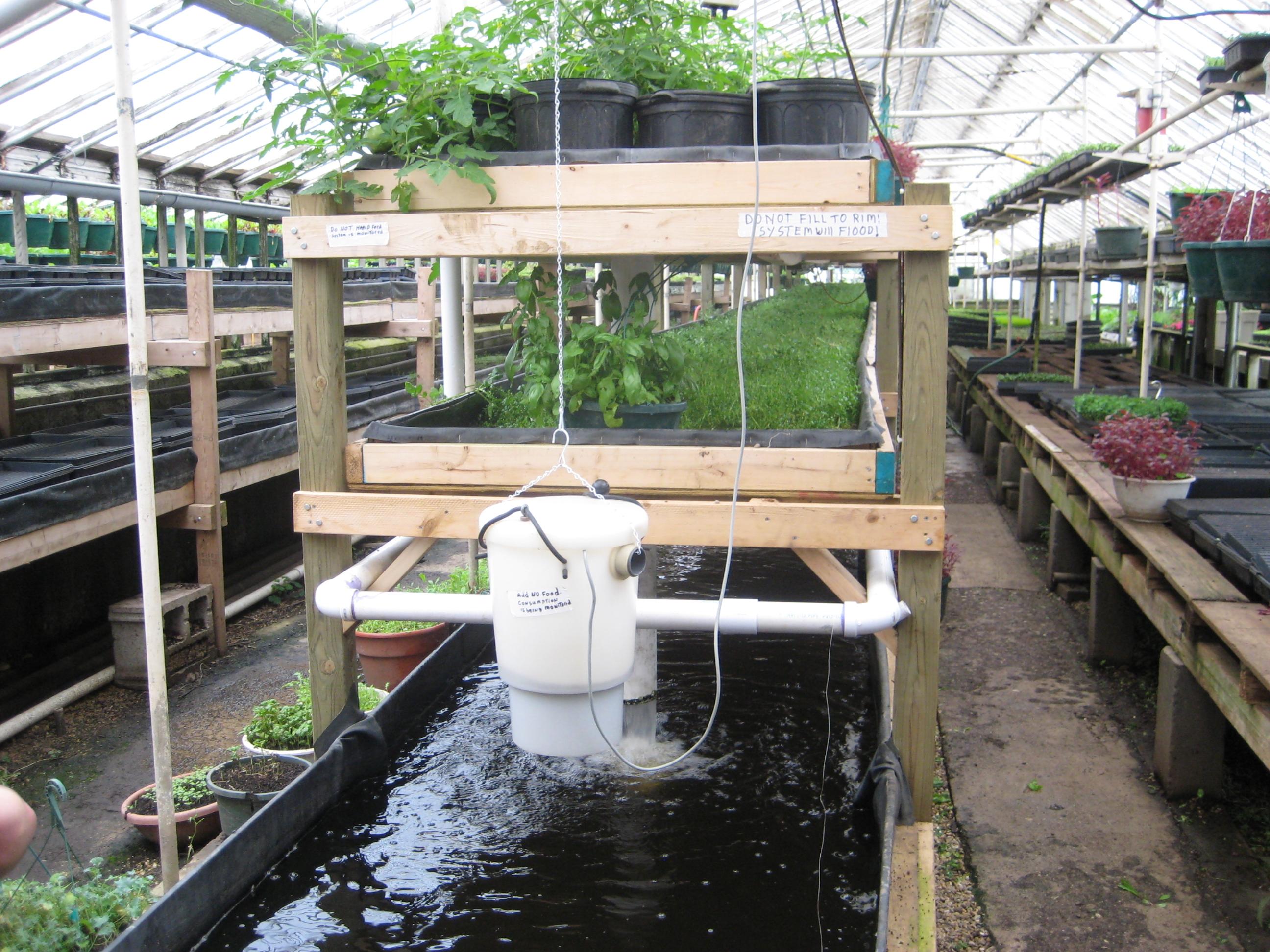 Aquaponic System Fish Farming