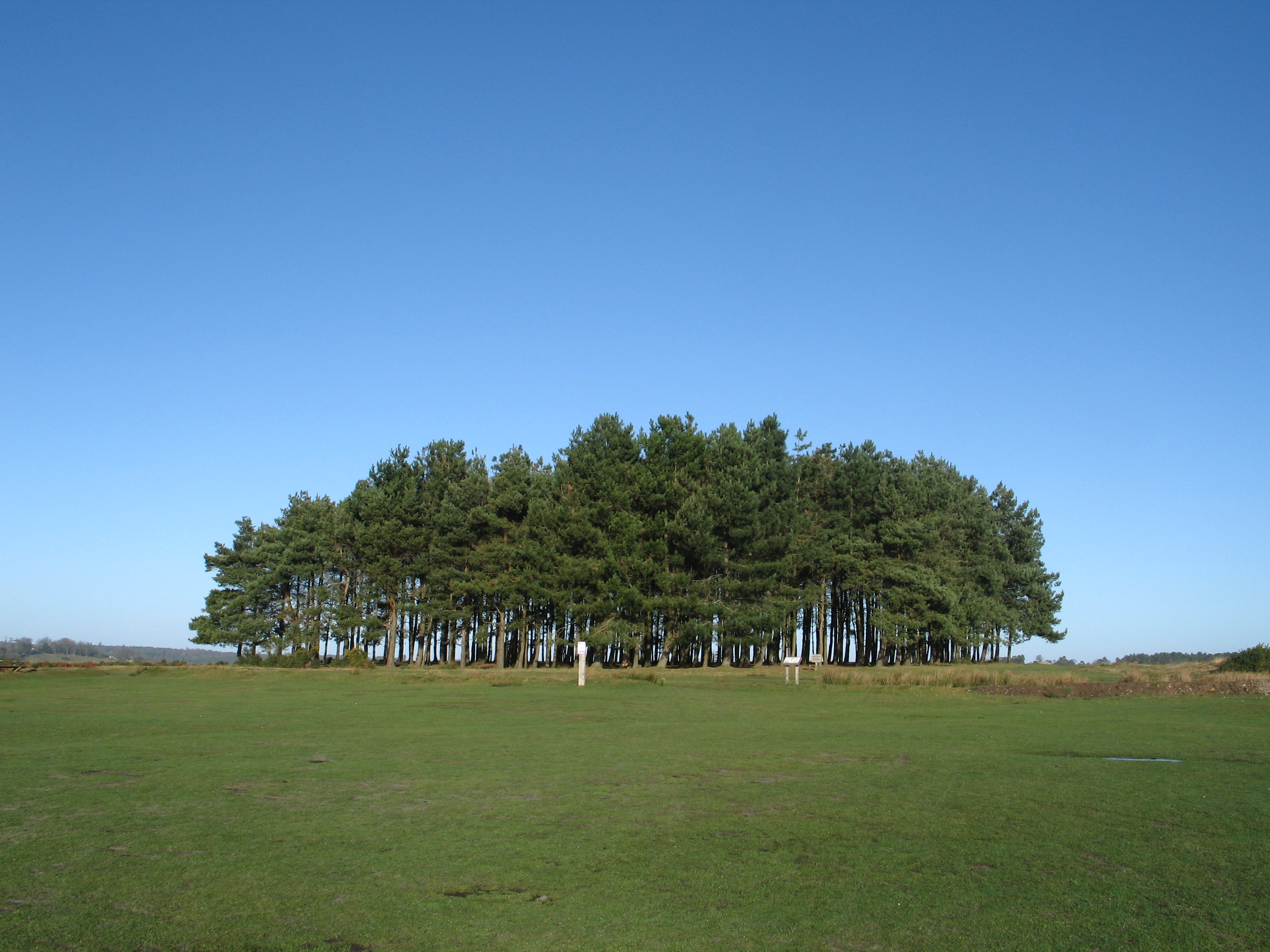 Ashdown Forest - Friends Clump.jpg