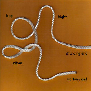 appendix parts of the knot wiktionary