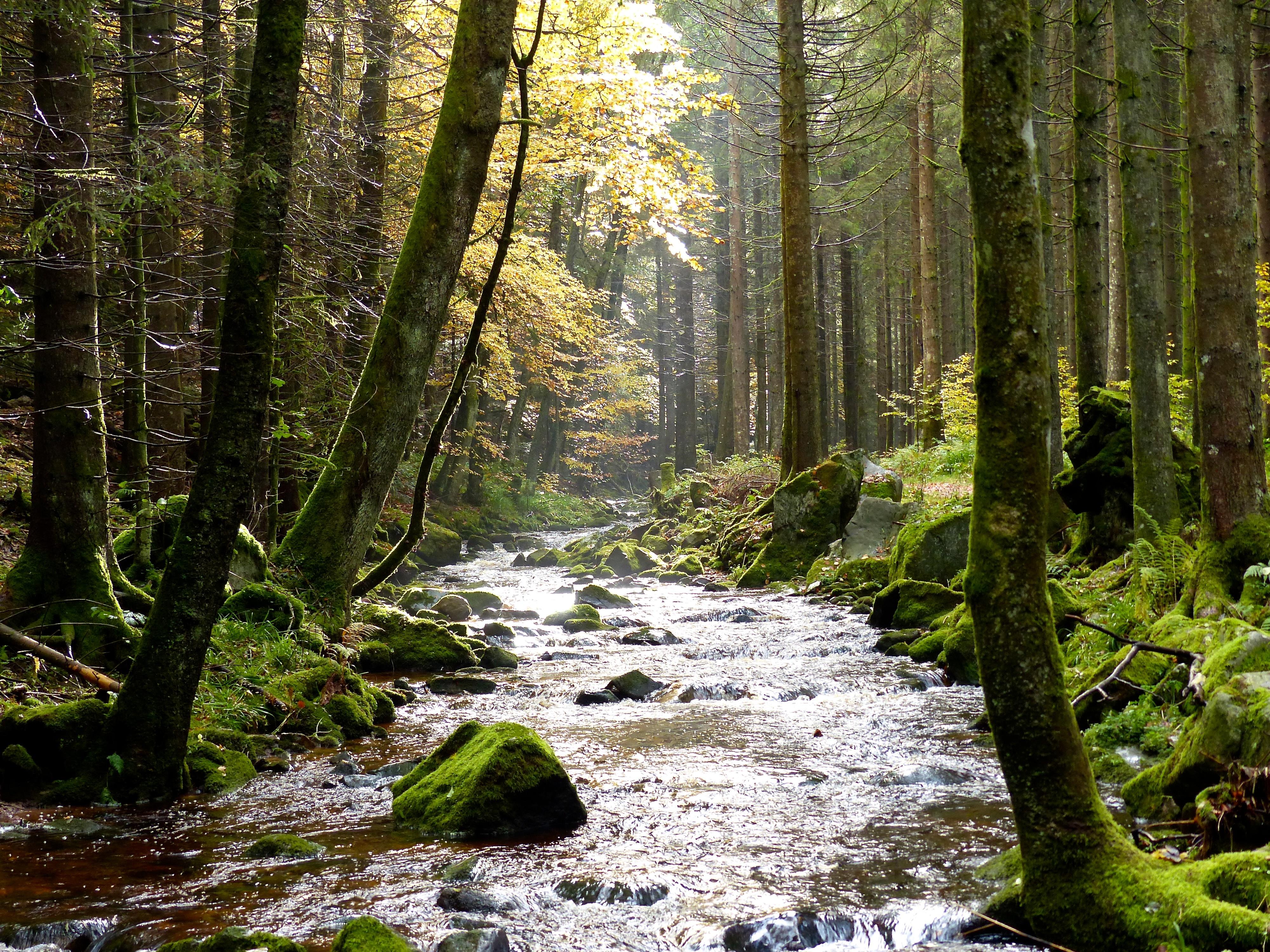Image result for black forest