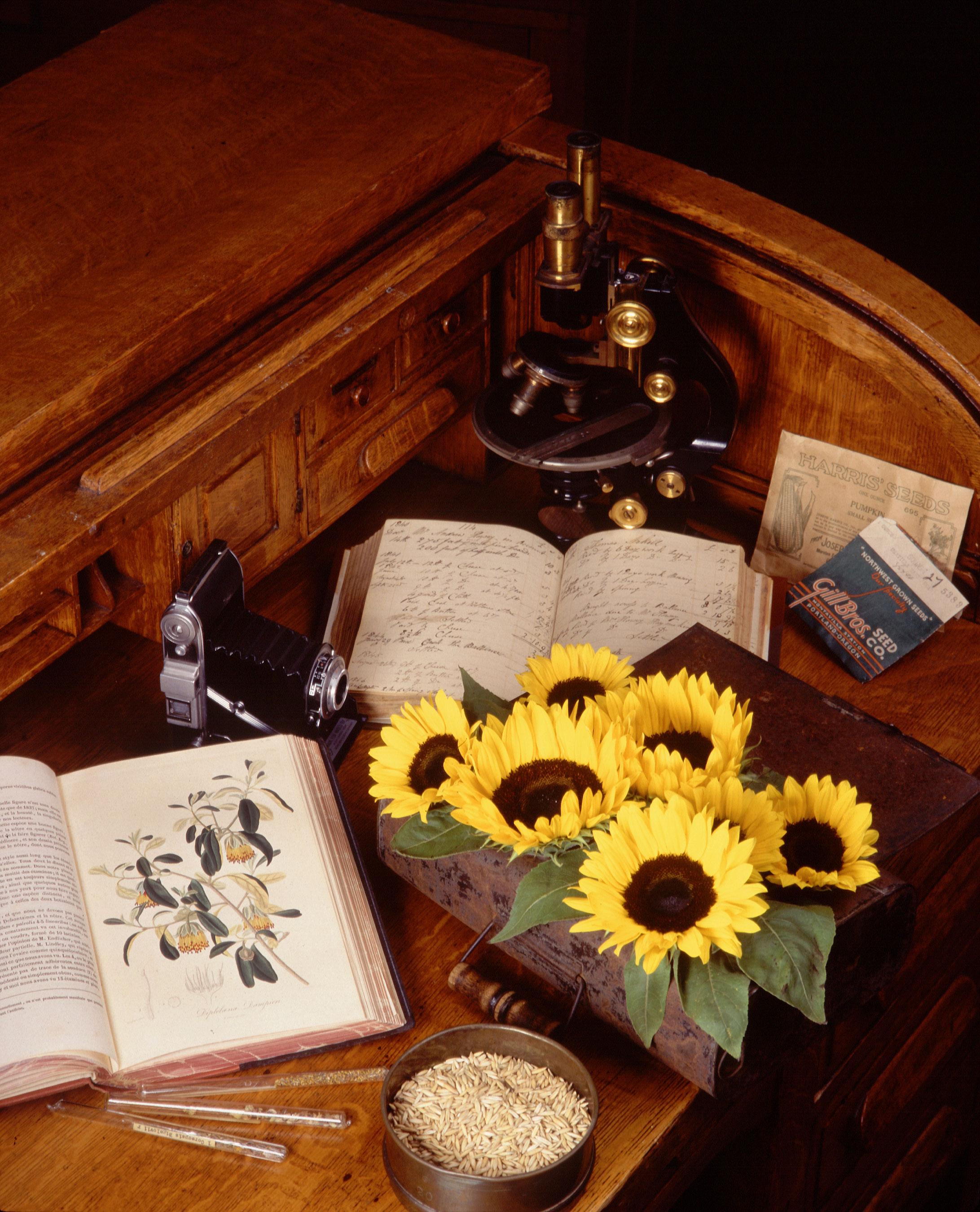 History of botany - Wikipedia