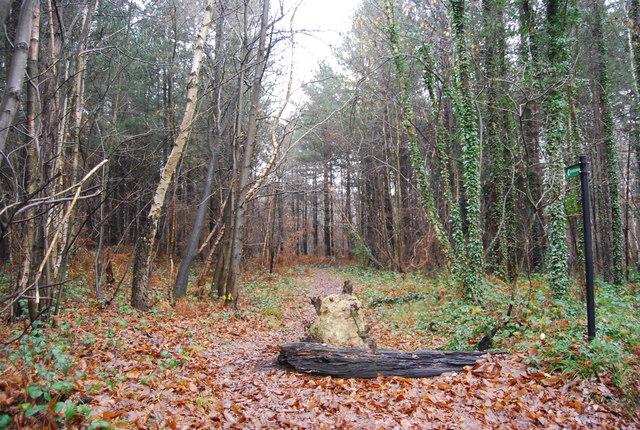 Bridleway in Pembury Woods - geograph.org.uk - 1065302