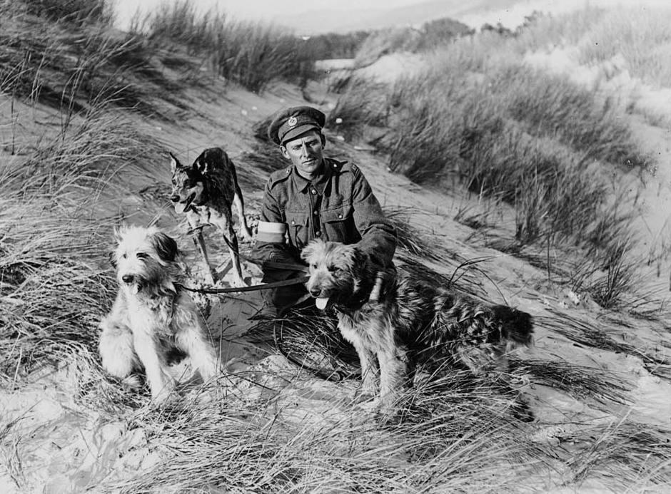 Jenny S Dog Wash Frankston