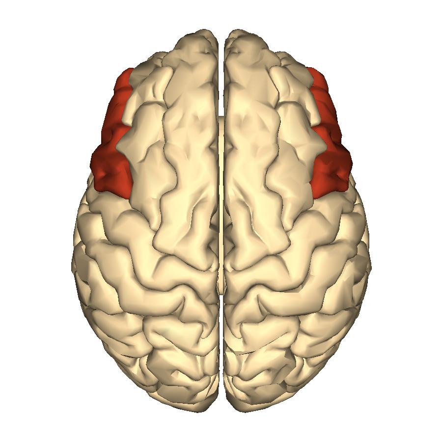 Filecerebrum Inferior Frontal Gyrus Superior Viewg