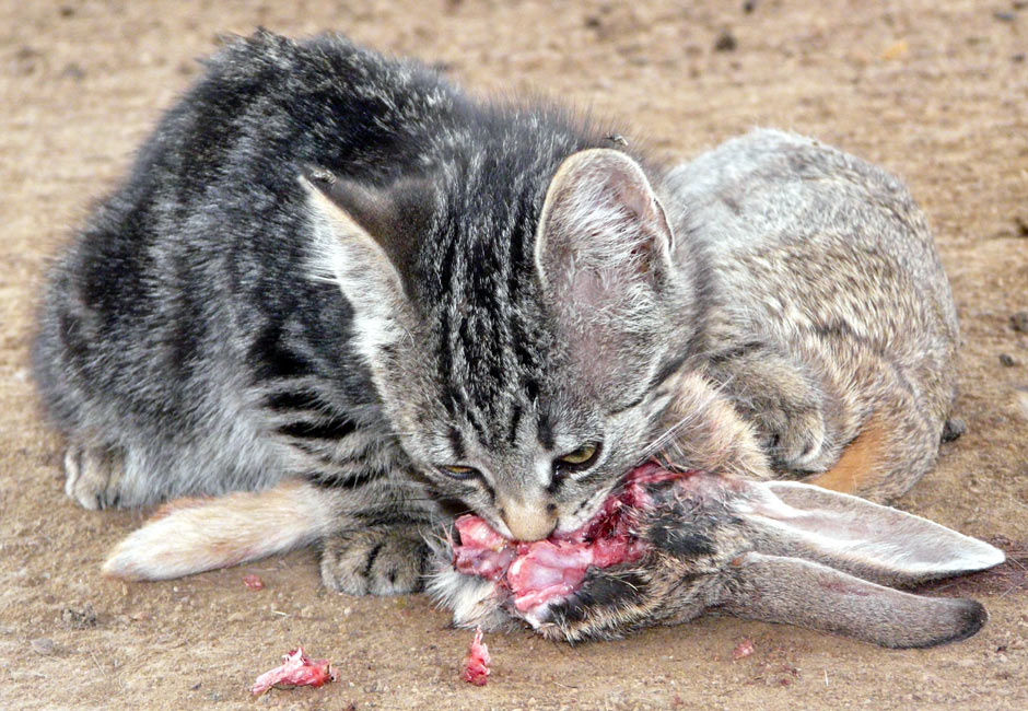 Rabbit Cat Food Uk