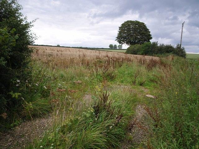 File:Field near Hill Barn Farm - geograph.org.uk - 508576.jpg