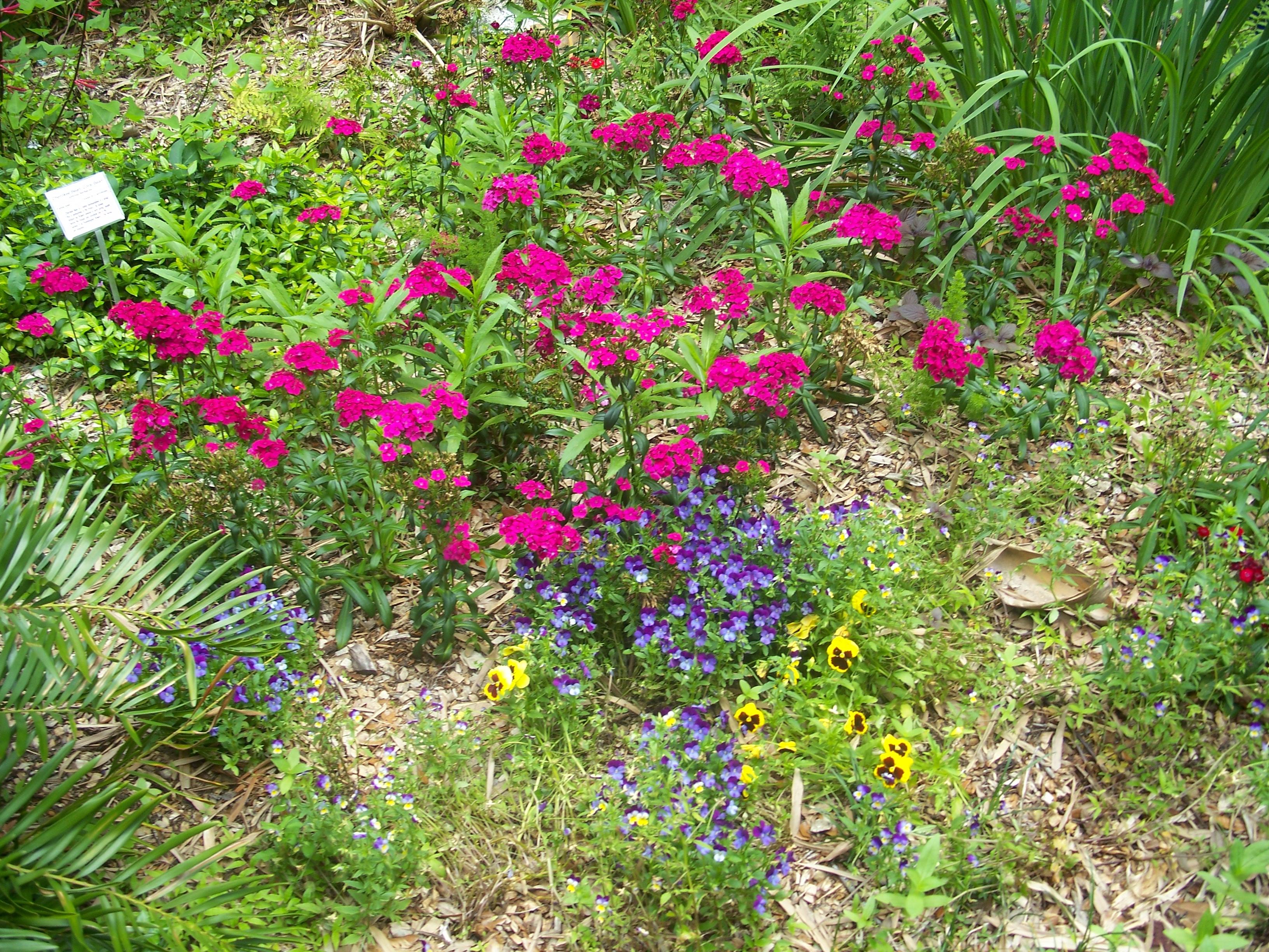 File:Gainesville FL Kanapaha Botanical Gardens Flowers01