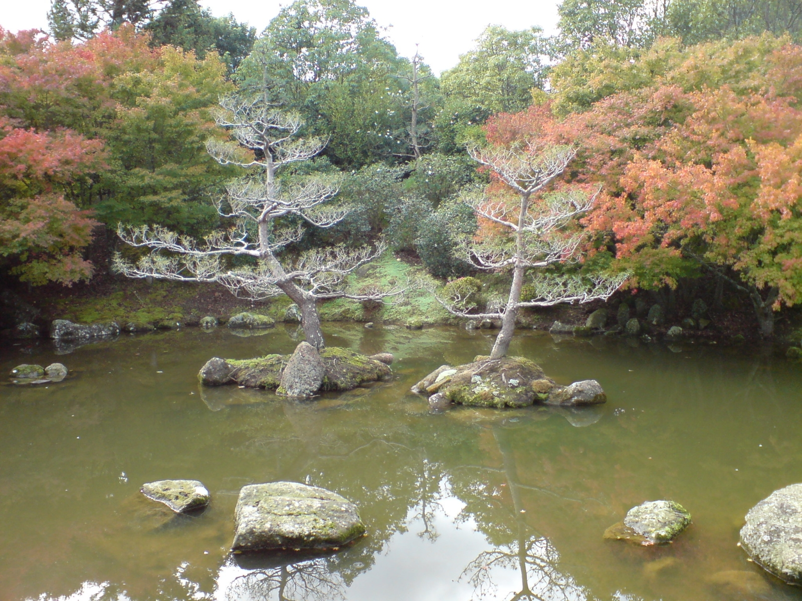 ファイル:Hamilton Gardens Japanese Garden 02