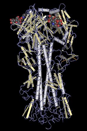 Bestand:Hemagglutinin molecule.png