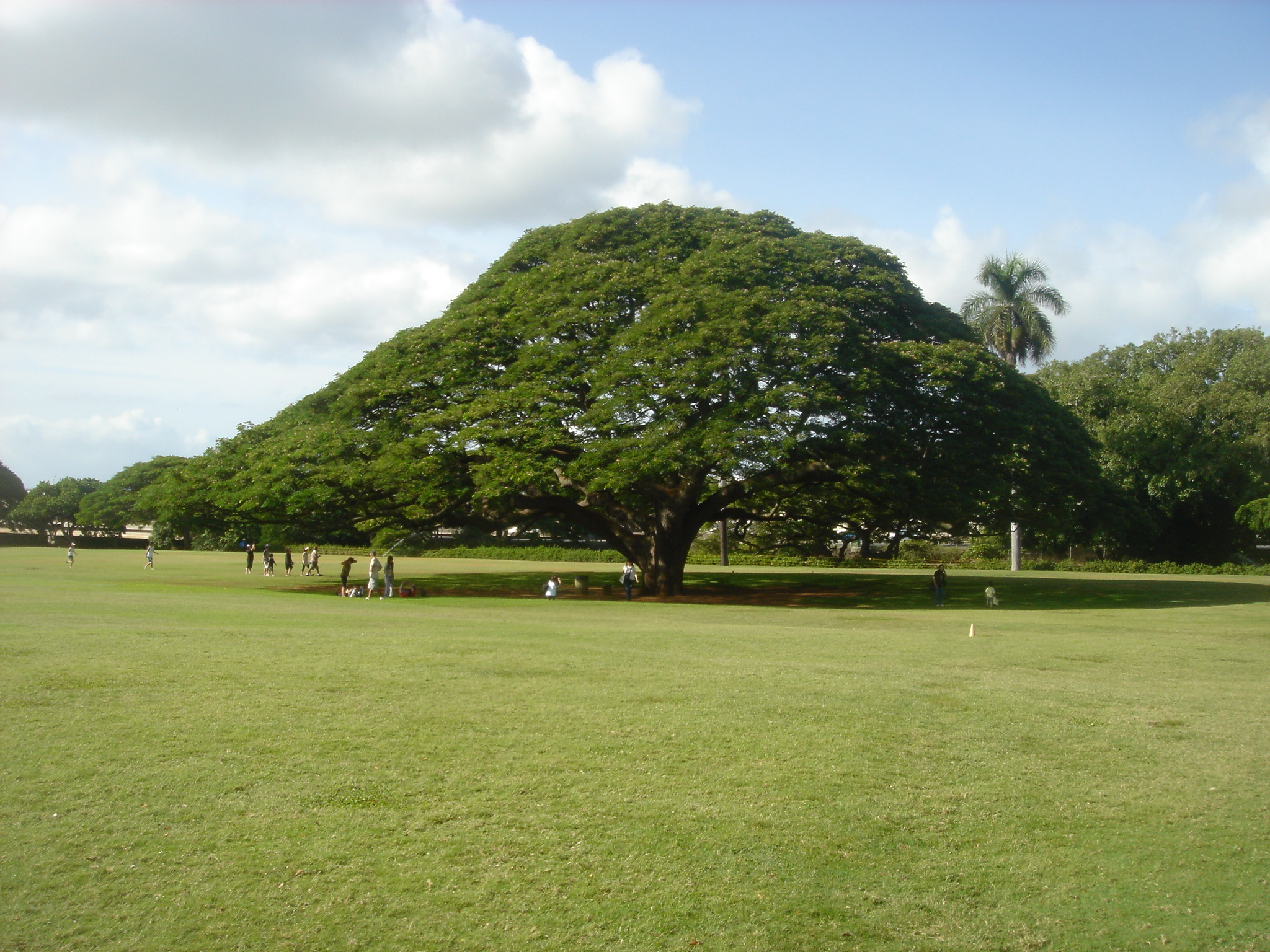 CMでおなじみの日本で最も有名と思われる広葉樹