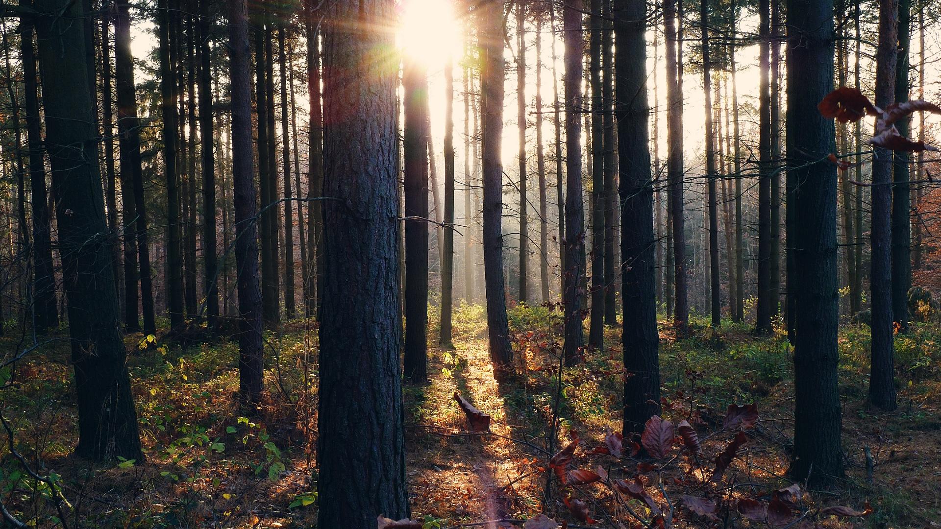 File Im Wald Panoramio 3 Jpg Wikimedia Commons