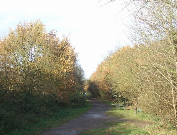 Kingswinford Railway Walk - geograph.org.uk - 287937