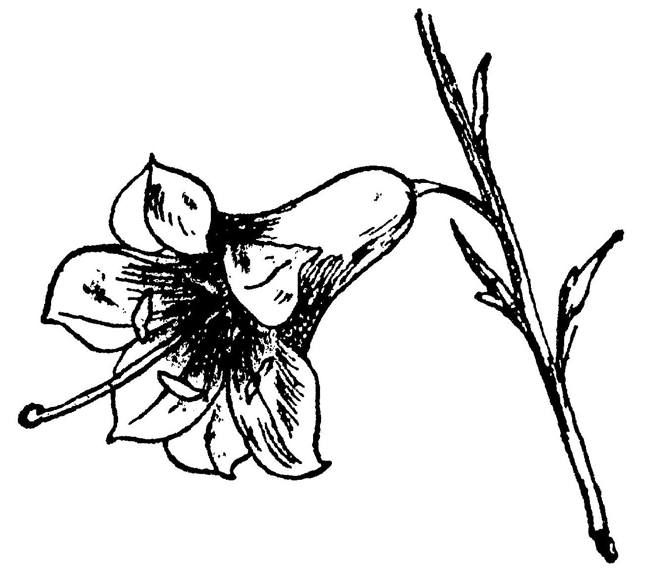 Lear 3 - Lily.jpg