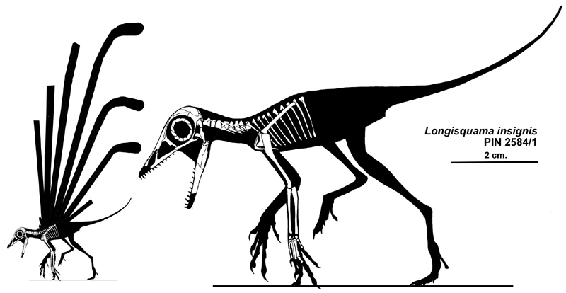 http://upload.wikimedia.org/wikipedia/commons/a/a1/Longisquama_insignis_skeleton%26silhouette_small.jpg
