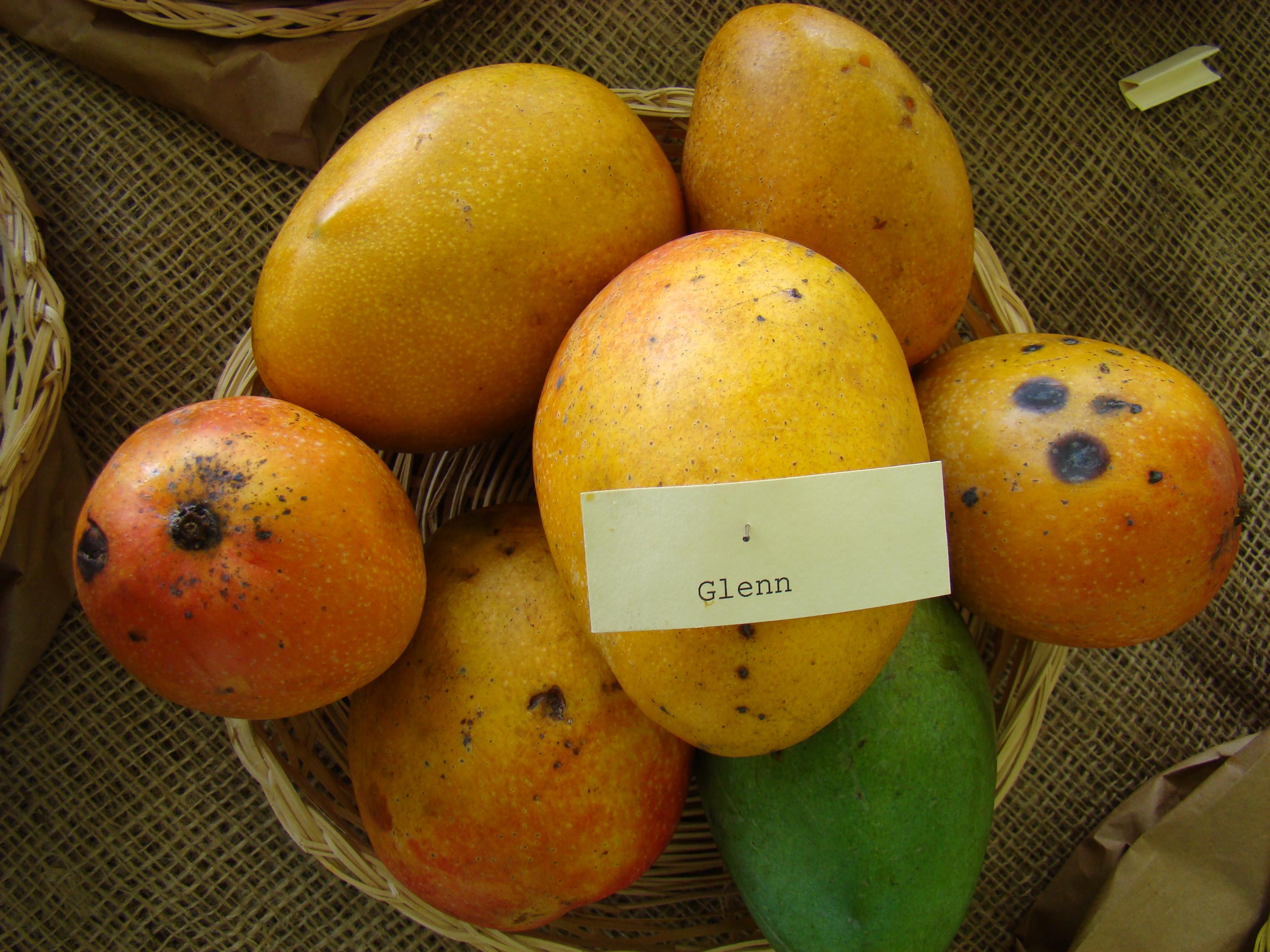 Come Piantare Il Mango glenn (botanica) - wikipedia