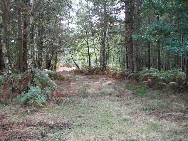 Open Ride in Broxbourne Woods - geograph.org.uk - 239228