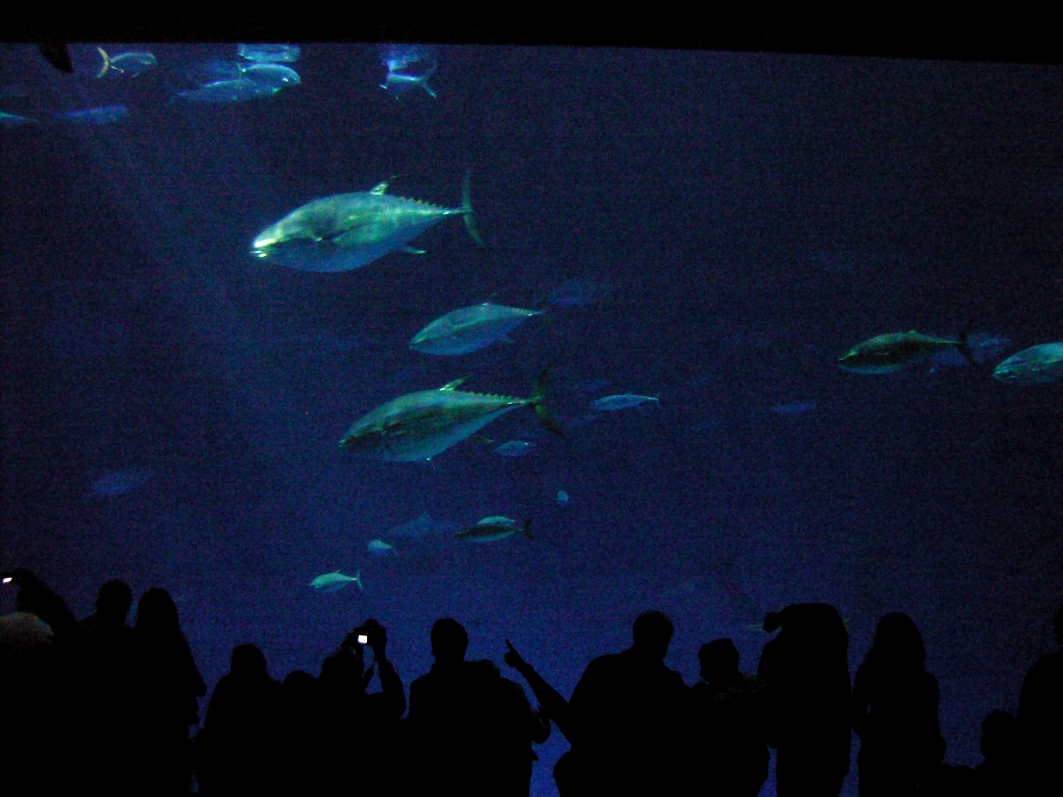 File Outer Bay Exhibit Monterey Bay Wikimedia Commons