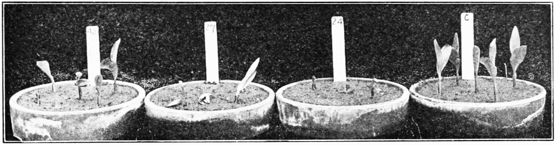 PSM V74 D235 Radium bromide may effect gravity effect on seed growth.png