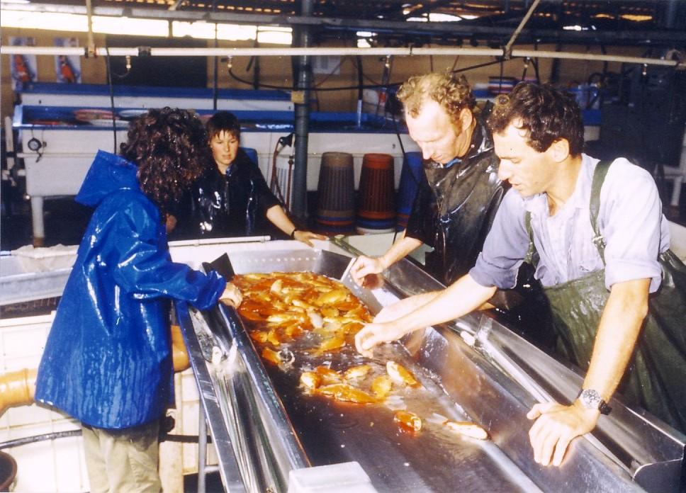 Live fish trade - Wikipedia