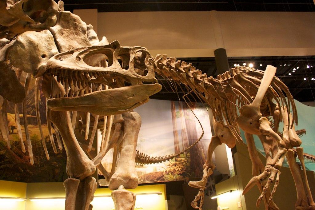 Какими были динозавры Все о заурофаганаксе || Какими были динозавры Все о заурофаганаксе
