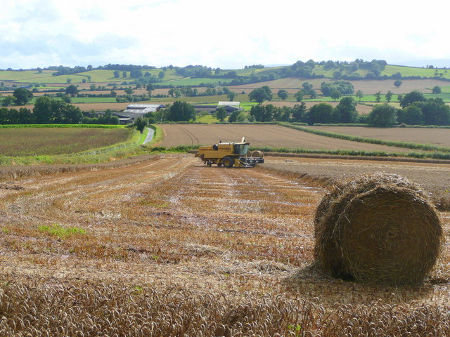 File:Too wet to harvest - geograph.org.uk - 928160.jpg