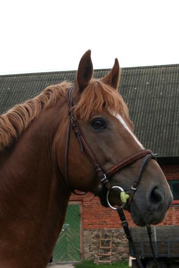 Tori horse sport.jpg