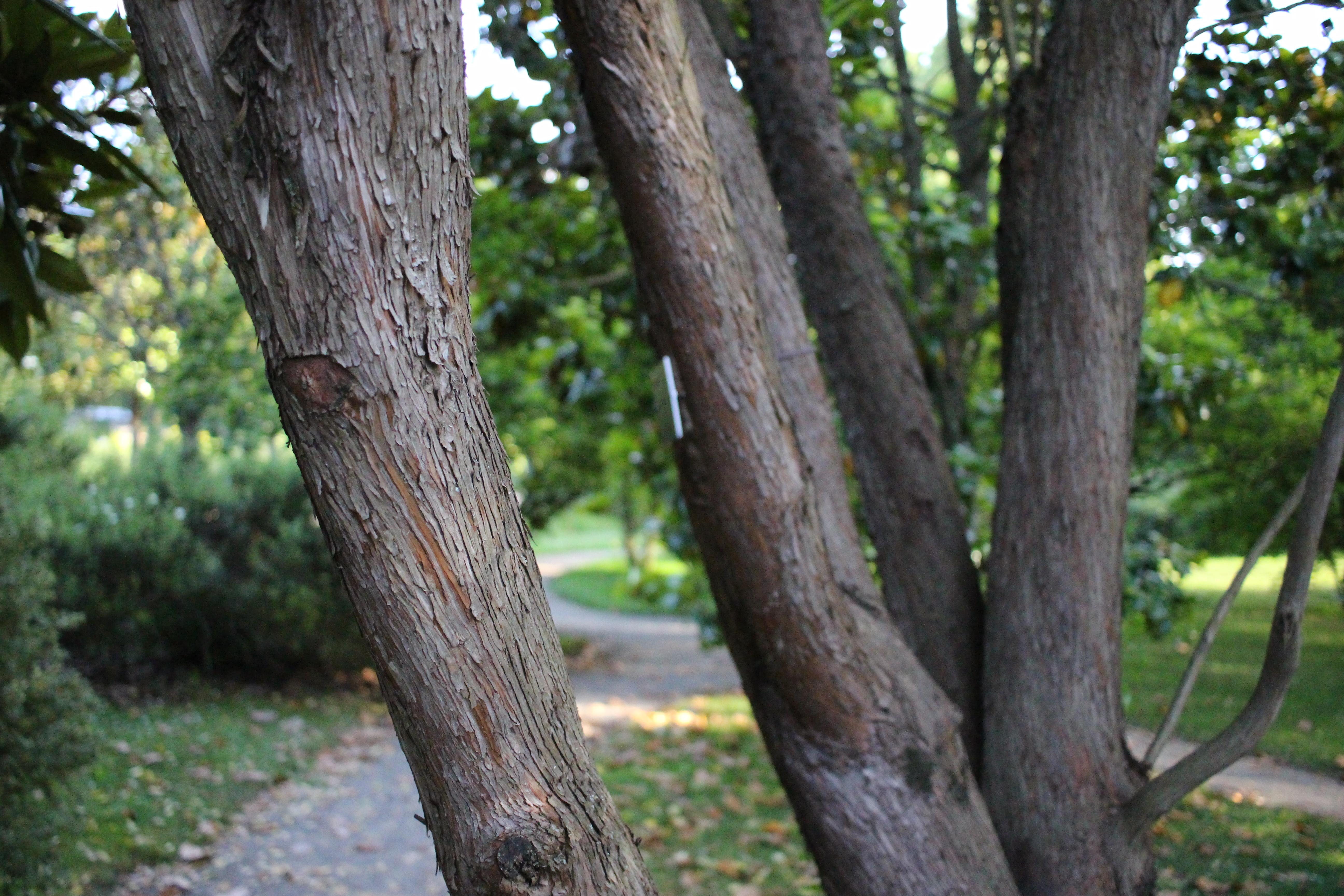 File Tours Allée Jardin Botanique Wikimedia mons
