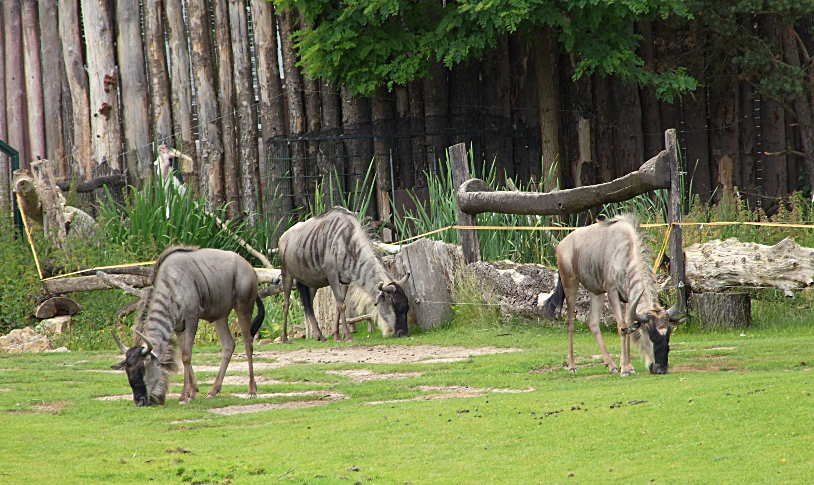 Zoo Leipzig Wiki