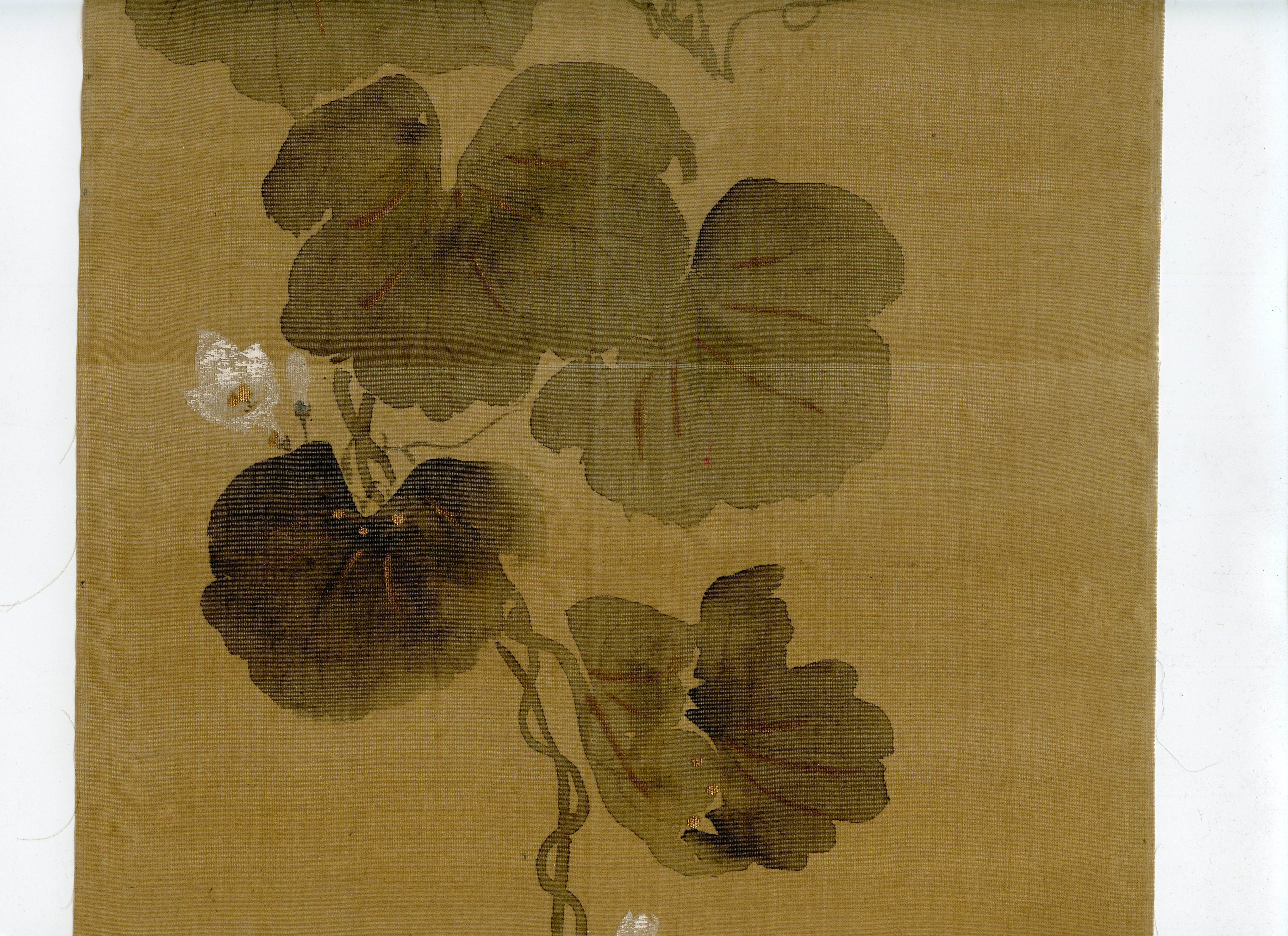 File:Wittig.collection.painting.02.flowering.gourd.vine ...
