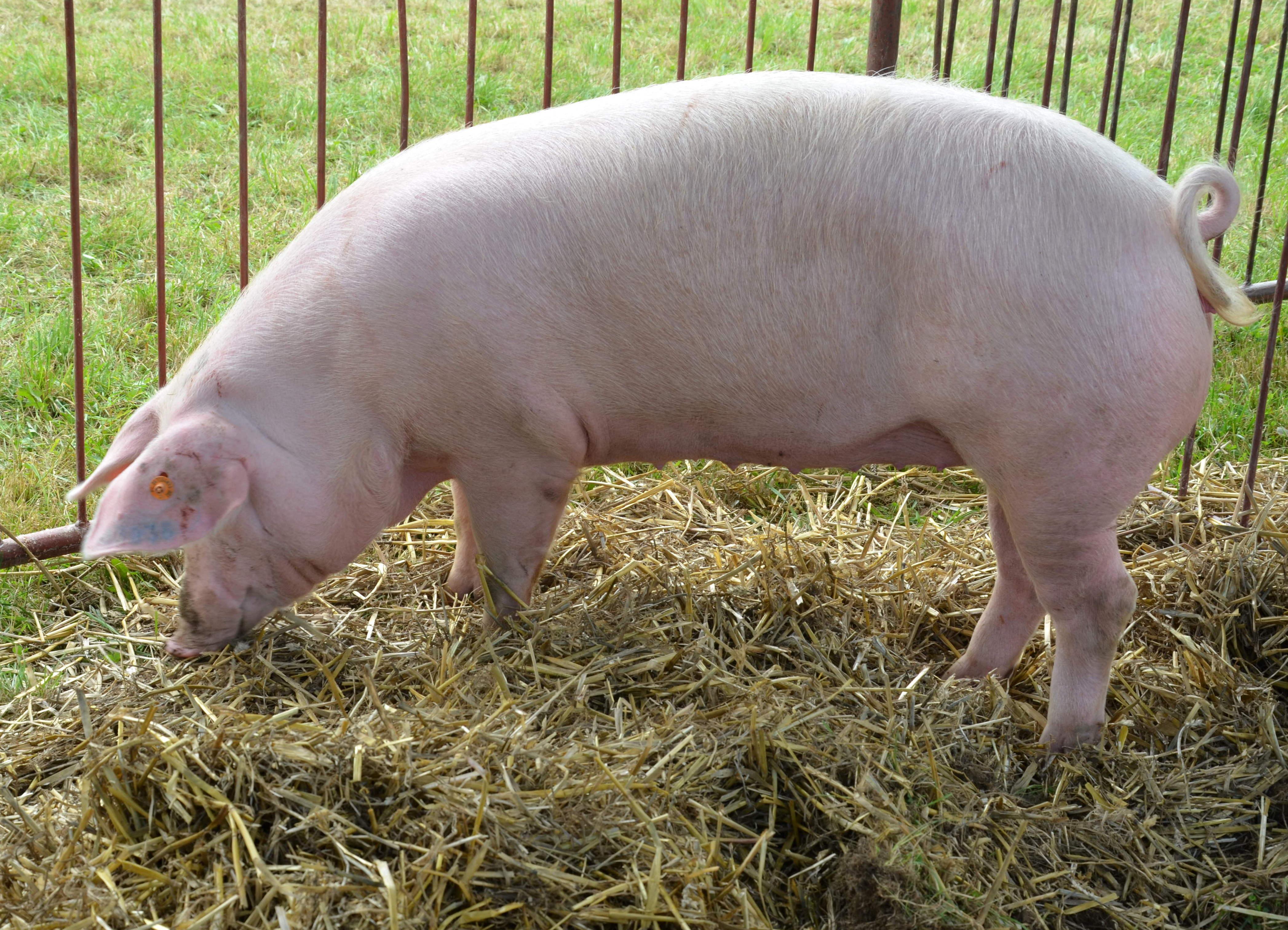 Пашина свиная жареная пошаговый рецепт с фото говорят, что