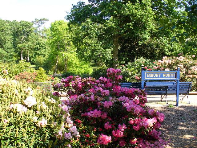File:American Garden, Exbury - geograph.org.uk - 450119.jpg