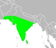 Areale L. malabarica