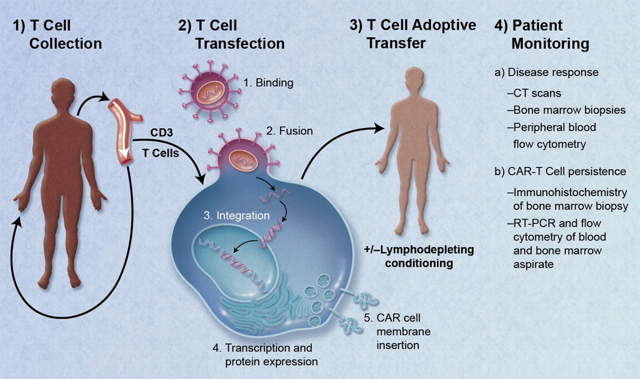 Изобразяване на приемна клетъчна трансферна терапия с Т-клетки, проектирани от CAR