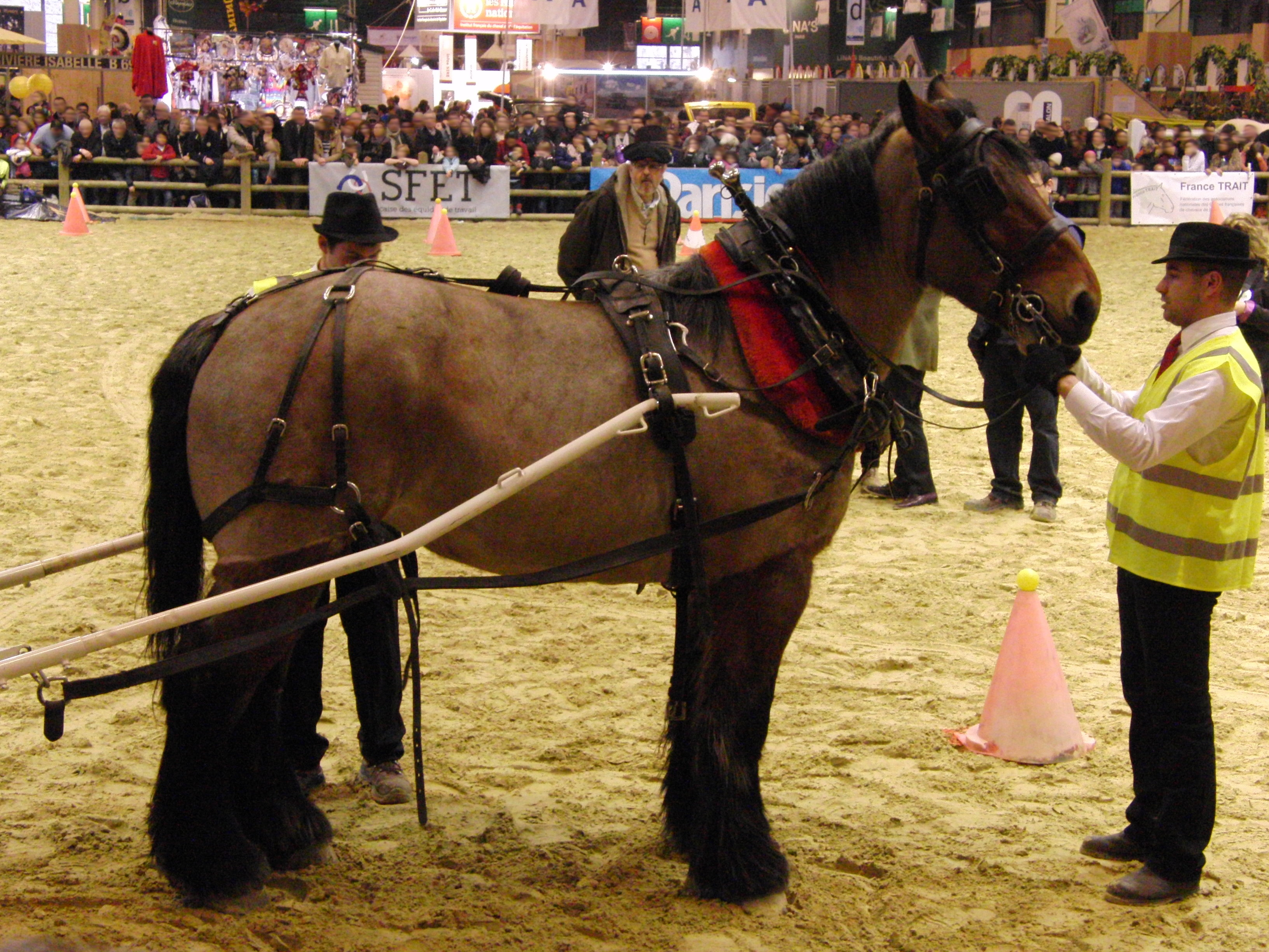 The Future Of The Thoroughbred Auxois Draft Horse Breed Characteristics