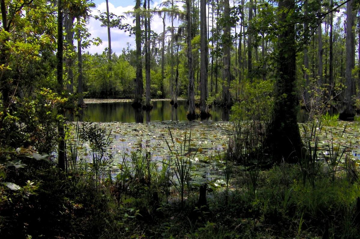 File Cypress Gardens South Carolina