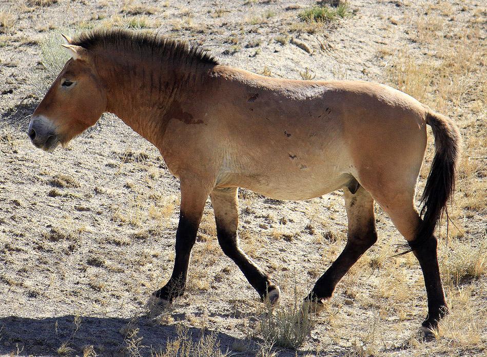 rassen van paarden