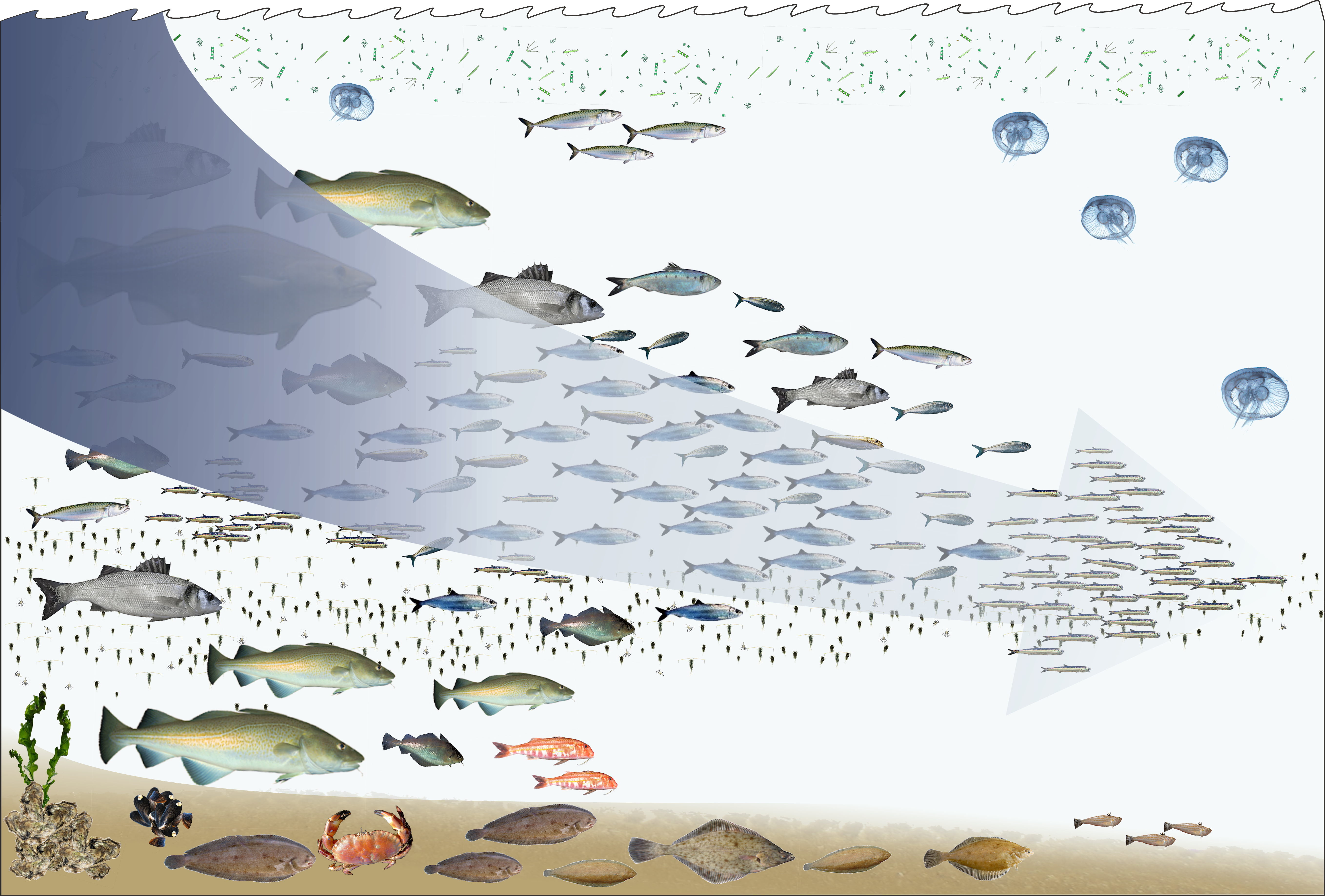 Environmental impact of fishing - Wikipedia