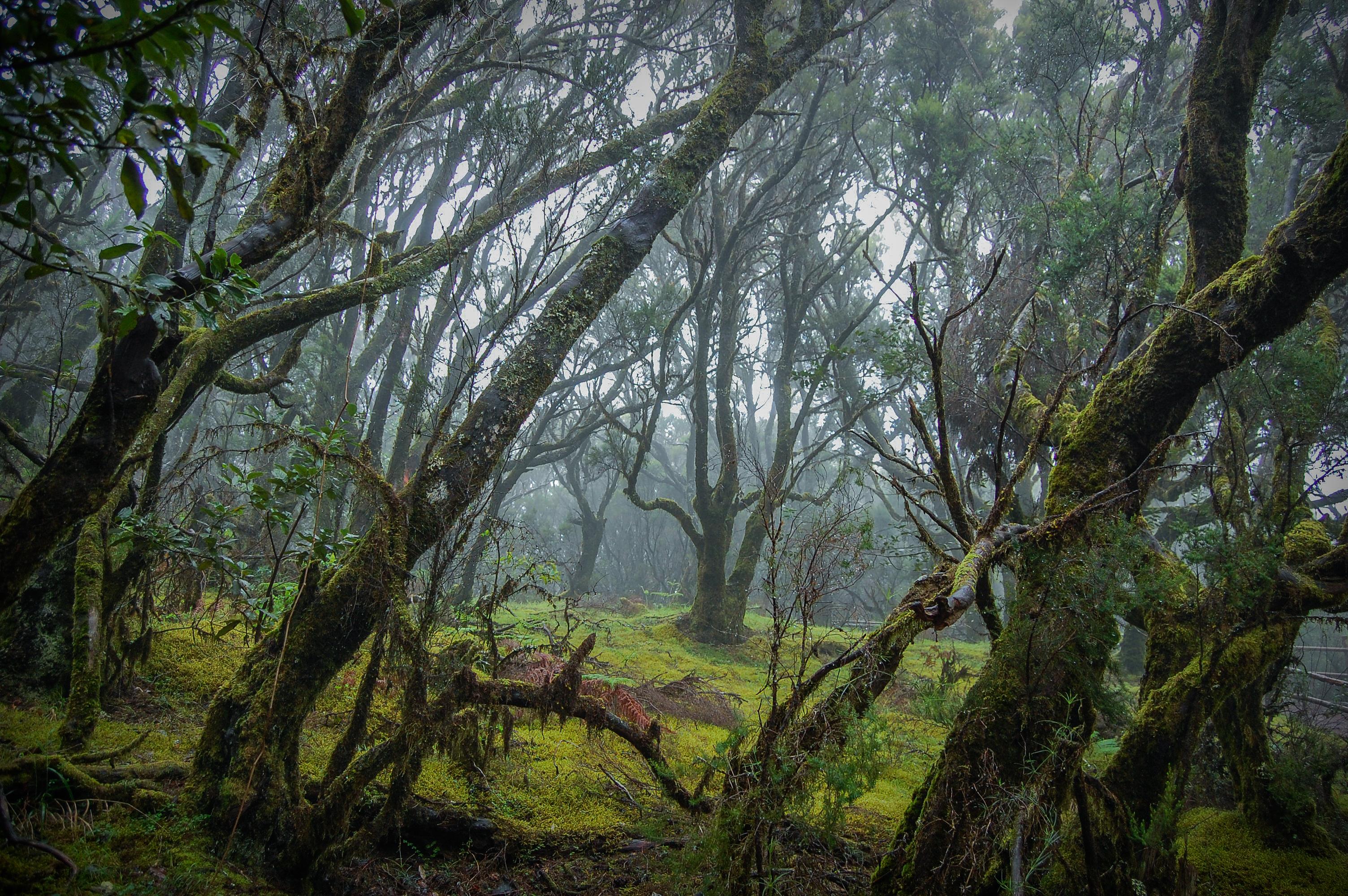 Site Nature Com Agrobacterium Rna Isolation