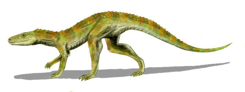 http://upload.wikimedia.org/wikipedia/commons/a/a2/Hesperosuchus_BW.jpg