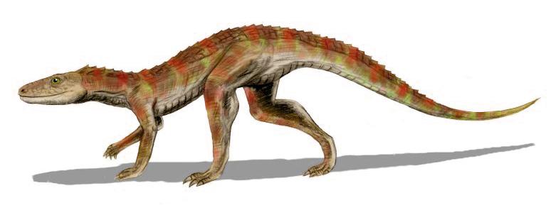 Hesperosuchus BW.jpg