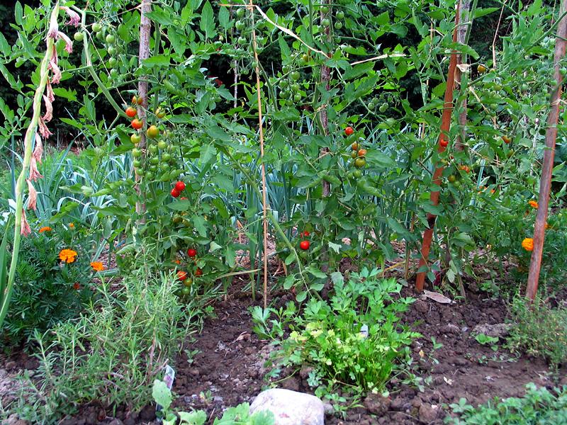 File:Jardin potager 6.jpg