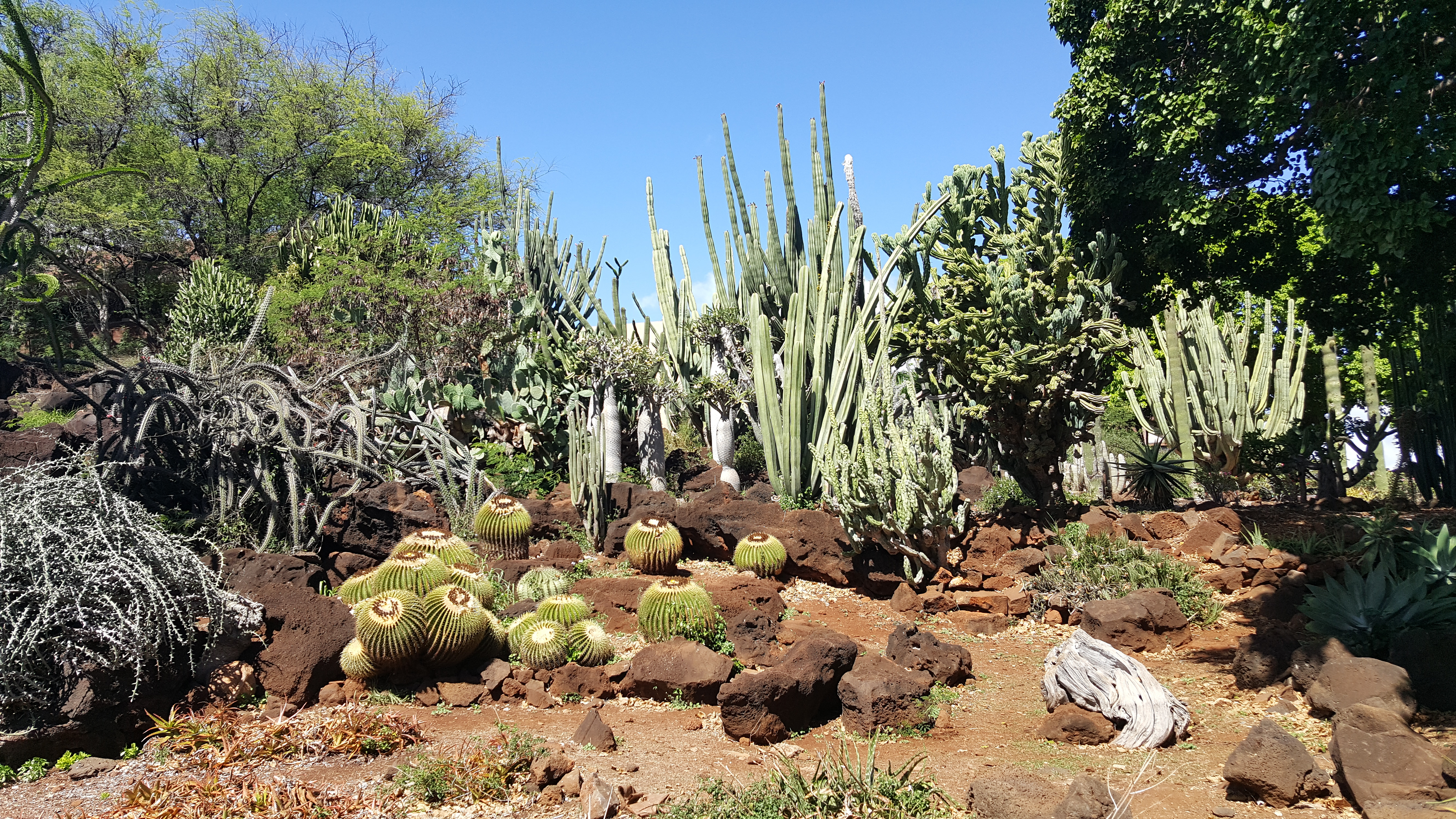 Kapiolani Community College Cactus Garden Wikipedia