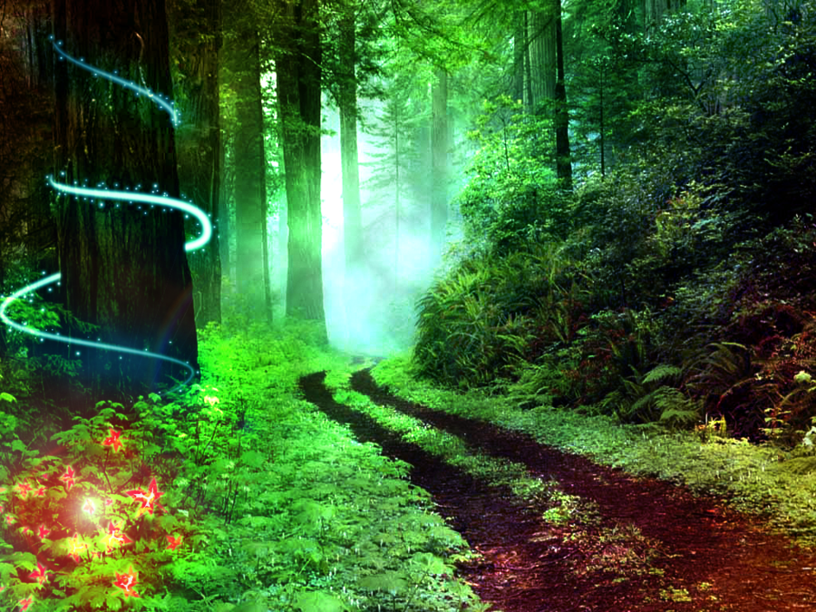 Path of Self Discovery File:Magical Forest.png - Wikimedia Commons